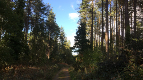 Newborough Forest, Anglesey, North Wales - Dog Walks Near Me
