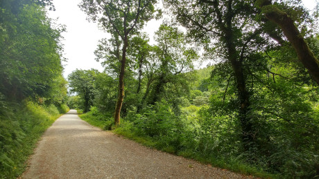 Cardinham Woods, Cornwall - Dog Walks Near Me