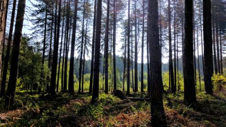 Sherwood Forest, Nottinghamshire - Dog Walks Near Me