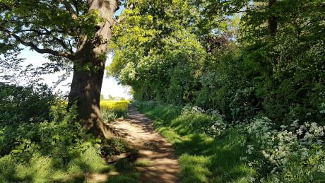 The Outwoods, Loughborough - Dog Walks Near Me
