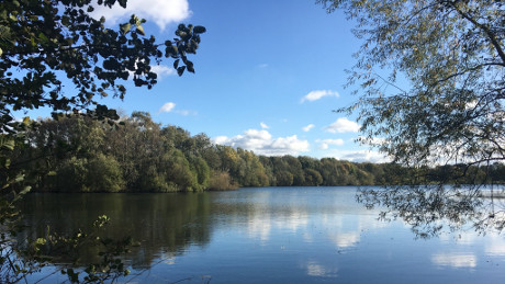 Chorlton Water Park - Dog Walks Near Me