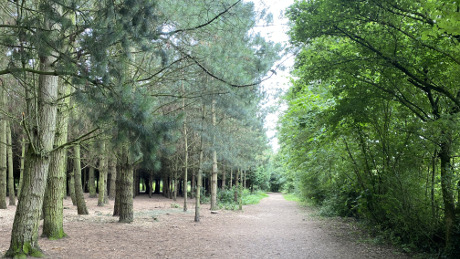 Fosse Meadows Country Park, Sharnford, Leicestershire - Dog Walks Near Me