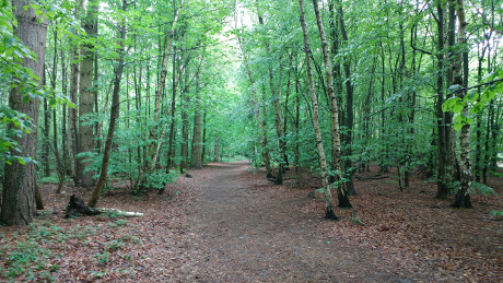 Willingham Woods, Lincolnshire Wolds - Dog Walks Near Me