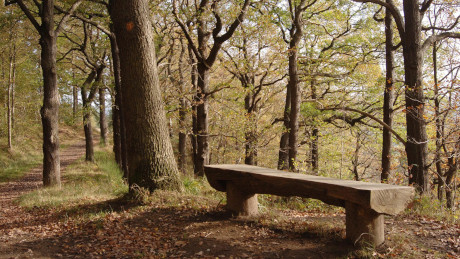 Chopwell Wood, Gateshead - Dog Walks Near Me