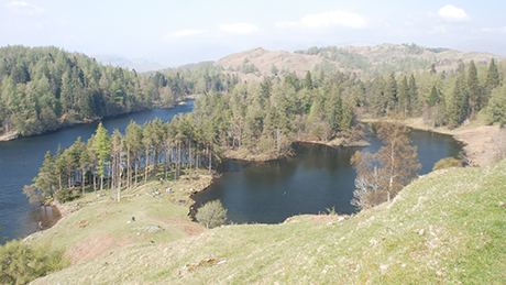 Tarn Hows, Lake District - Dog Walks Near Me