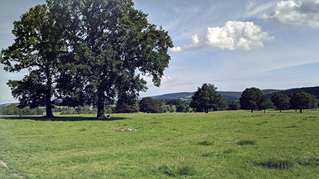 Chatsworth Park, Derbyshire - Dog Walks Near Me