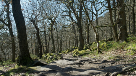 Padley Gorge - Dog Walks Near Me