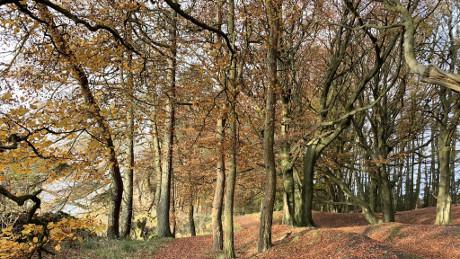 Beecraigs Country Park, Linlithgow, West Lothian - Dog Walks Near Me