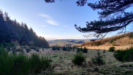 Kirkhill Forest, Aberdeenshire - Dog Walks Near Me