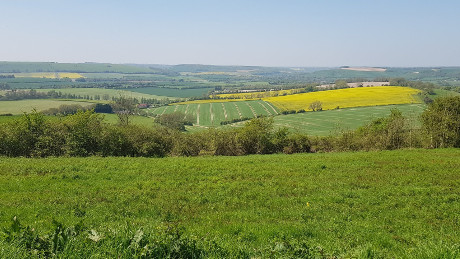 Butser Hill, South Downs National Park - Dog Walks Near Me