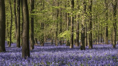 National Trust Ashridge Estate, Hertfordshire - Dog Walks Near Me