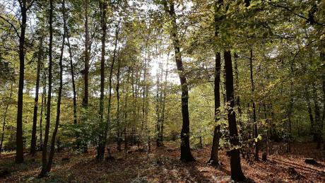 Broxbourne and Bencroft Woods, Hertfordshire - Dog Walks Near Me