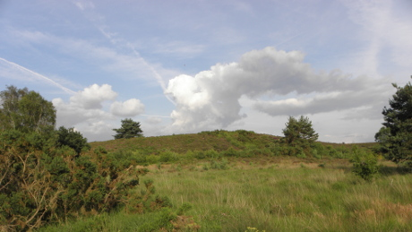 Chobham Common - Dog Walks Near Me