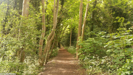 Foxley Wood, Purley - Dog Walks Near Me