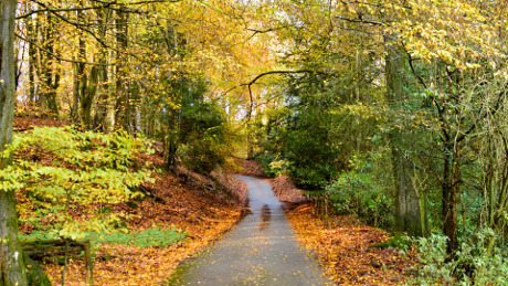 Leith Hill, Surrey Hills - Dog Walks Near Me
