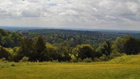 Reigate Hill, Surrey Hills - Dog Walks Near Me