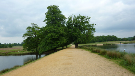 Tamsin Trail, Richmond Park - Dog Walks Near Me