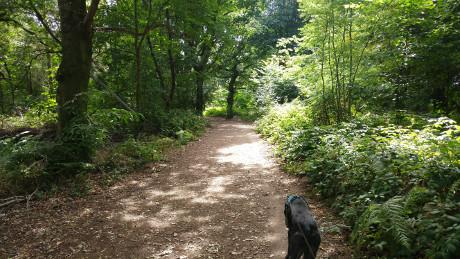 Crackley Wood, Kenilworth, Warwickshire - Dog Walks Near Me