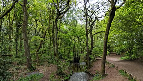 Downs Banks, Stone, Staffordshire - Dog Walks Near Me