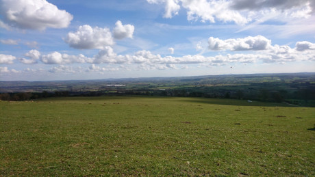 Mortimer Forest, Ludlow - Dog Walks Near Me