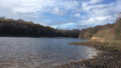 Sutton Park, Birmingham, West Midlands - Dog Walks Near Me