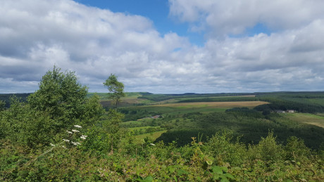 Dalby Forest, North York Moors National Park - Dog Walks Near Me